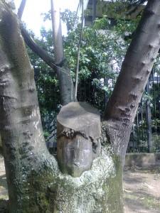 La cara del árbol
